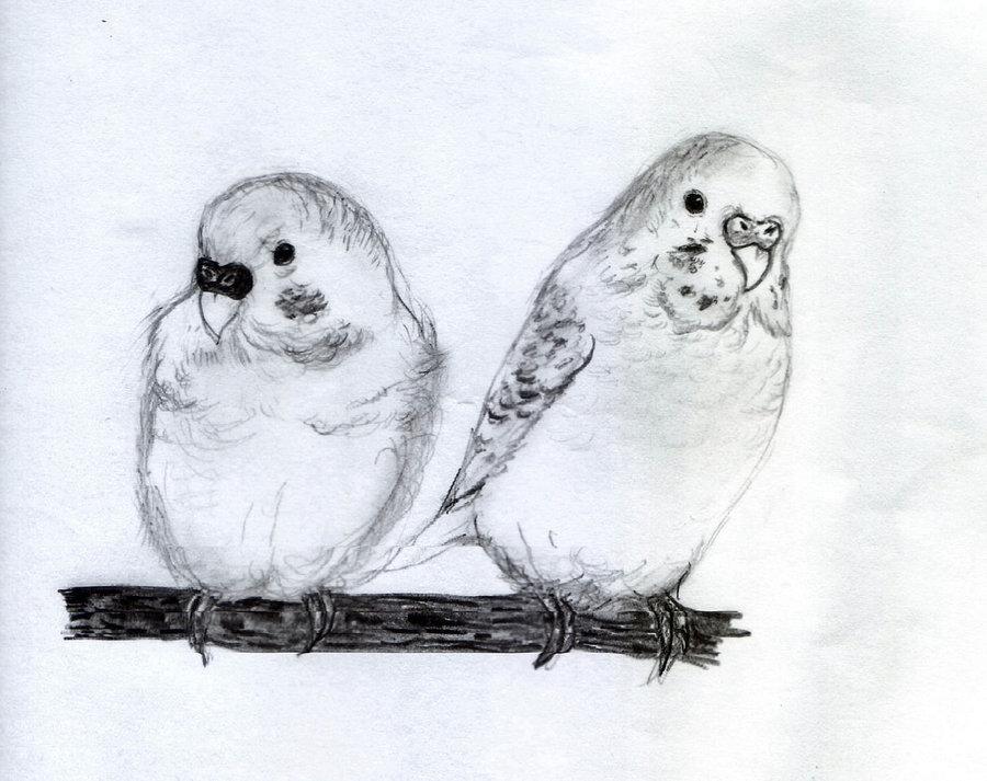 Czeshop Images Cute Love Birds Drawings
